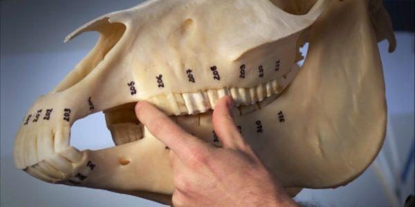 dentisterie3