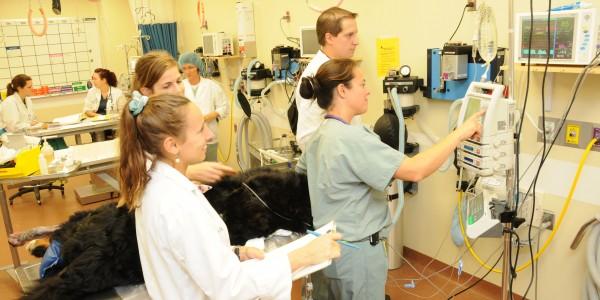 equipe anesthesie