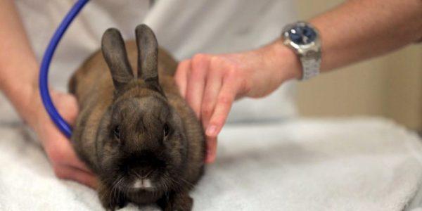 rabbit examination