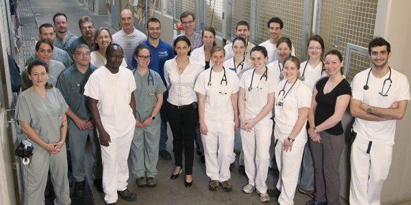 Equine hospital team