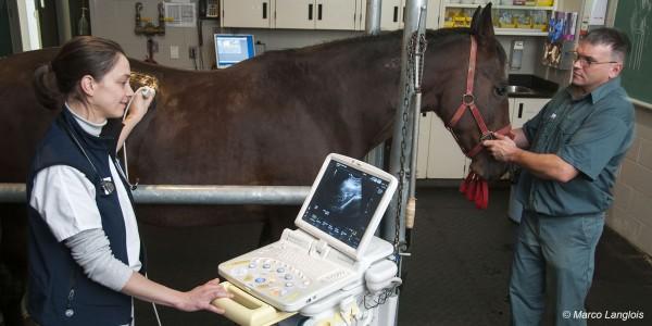 echo medecine equine