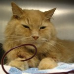 LA BANQUE DE SANG     À l'instar des humains, les chiens et les chats peuvent donner du sang afin d'aider leur prochain.