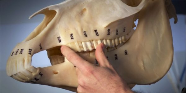 dentisterie HE3