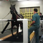 tapis roulant cheval